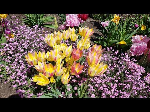 Van Dusen Botanical Garden, Vancouver, Canada