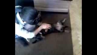 Как чесать собаку! How to scrape a dog!!