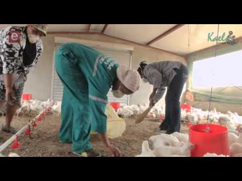 S8E11 Standard Bank - Chicken Farming Cluster
