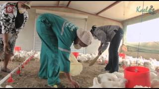 S8E11 Standard Bank - Chicken Farming Cluster