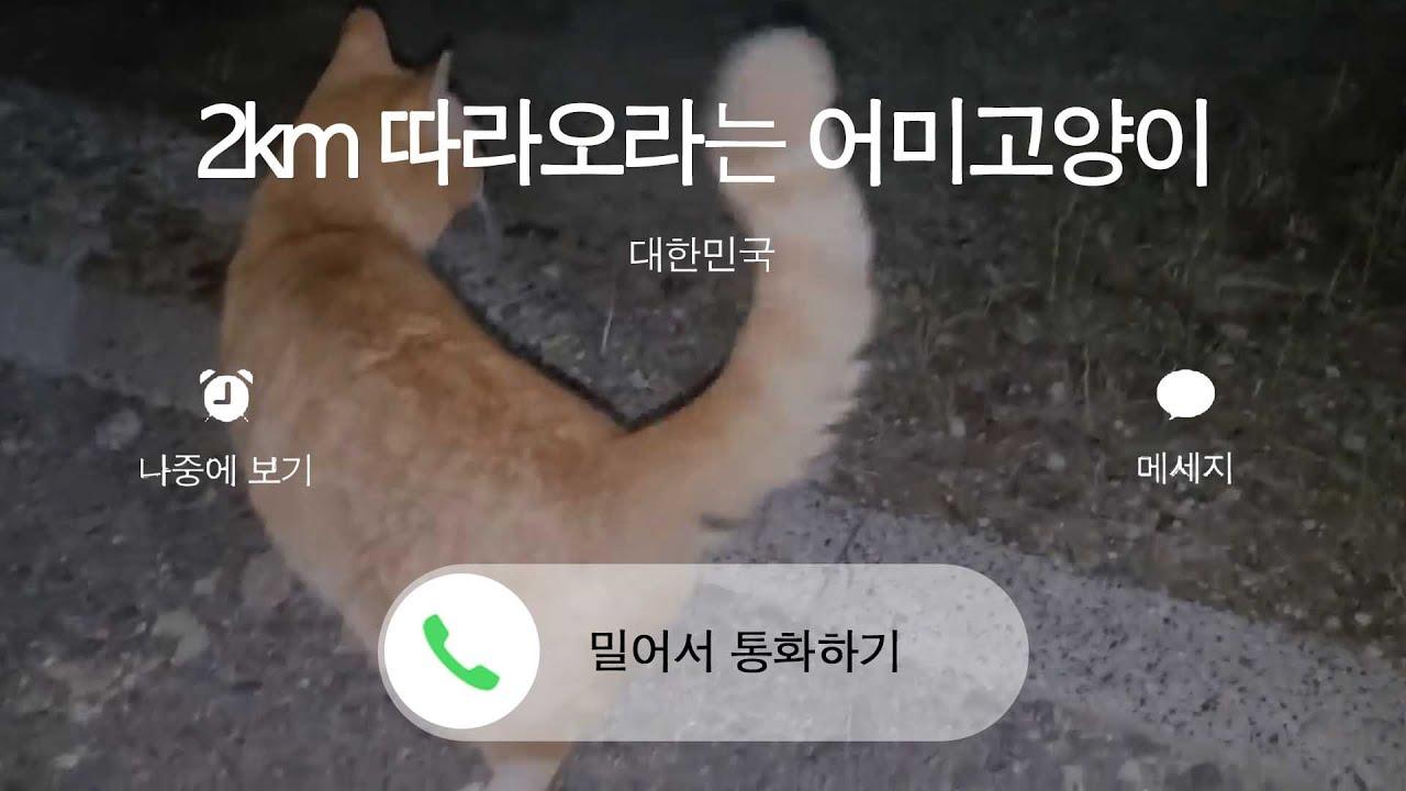나예요 전설의 파이프 구조 고양이….'매탈남' 채널 누리 이야기!