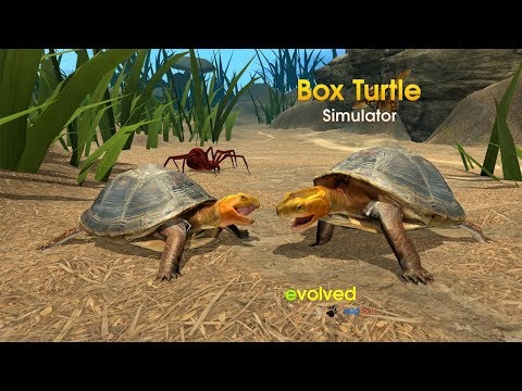Box Turtle Simulator (By Wild Foot Games) Android Gameplay