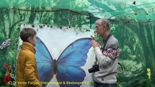 Экскурсия Энтомолога: Интервью На выставке живых бабочек