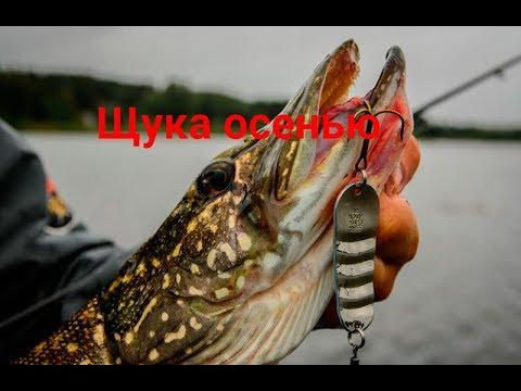 видео: Рыбалка на щуку в сентябре.Как ловить?Где искать?