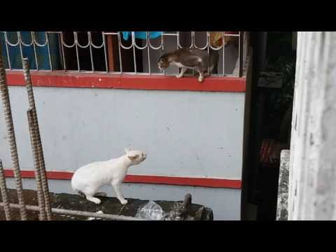 Funny video 2 Cats Fight
