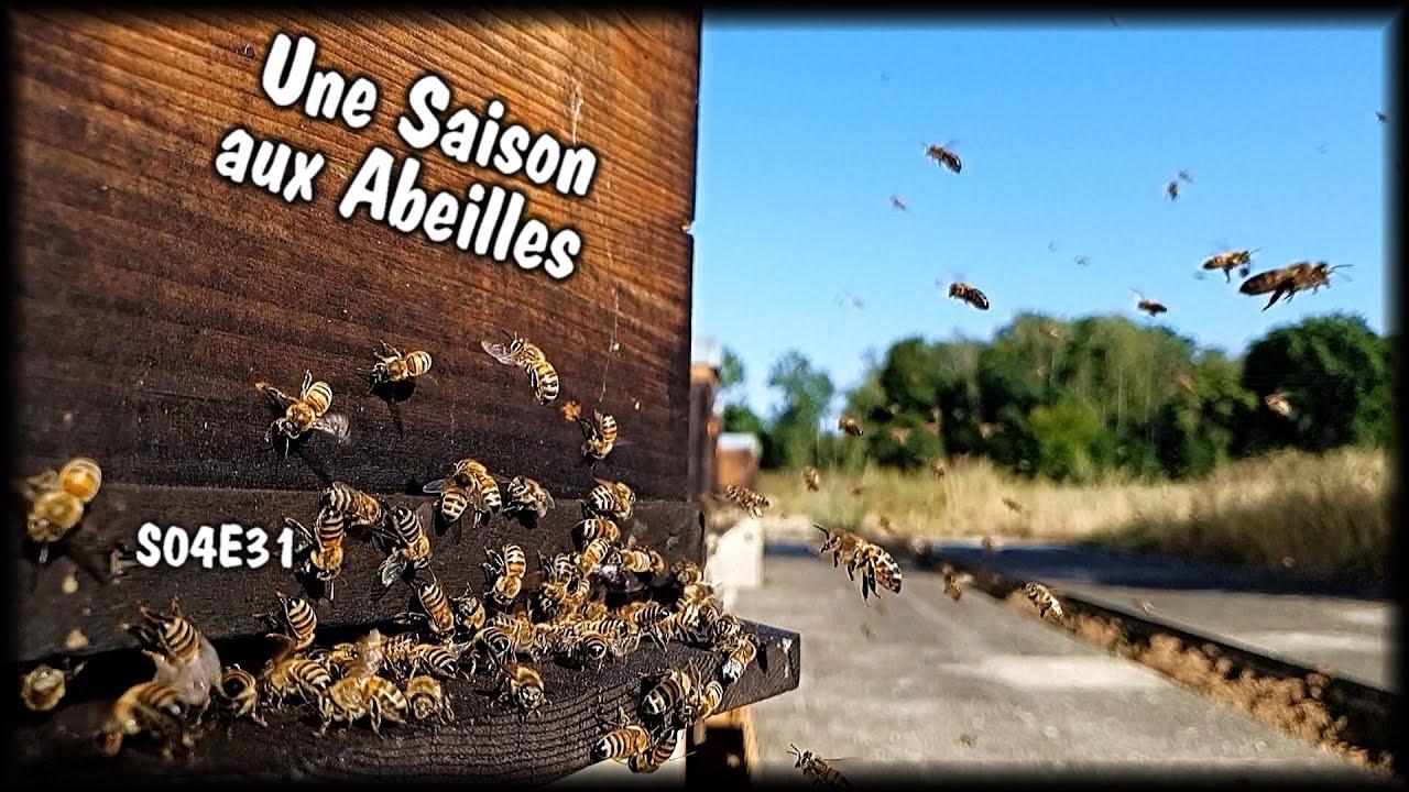 Une Saison aux Abeilles - S04E31