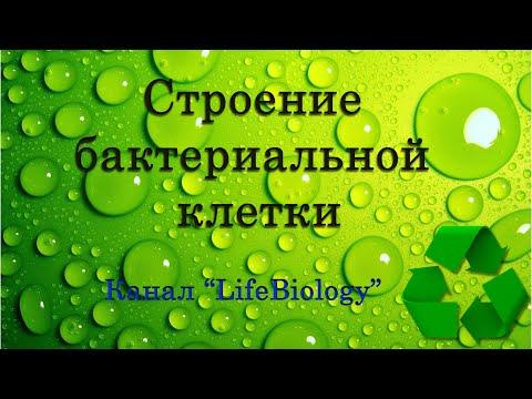 13. Биологические мембраны клетки. Их свойства, строение и