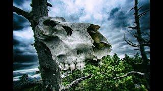 Фильм про охоту в тайге, Таежное счастье 2, сезон Зверя, Пролог