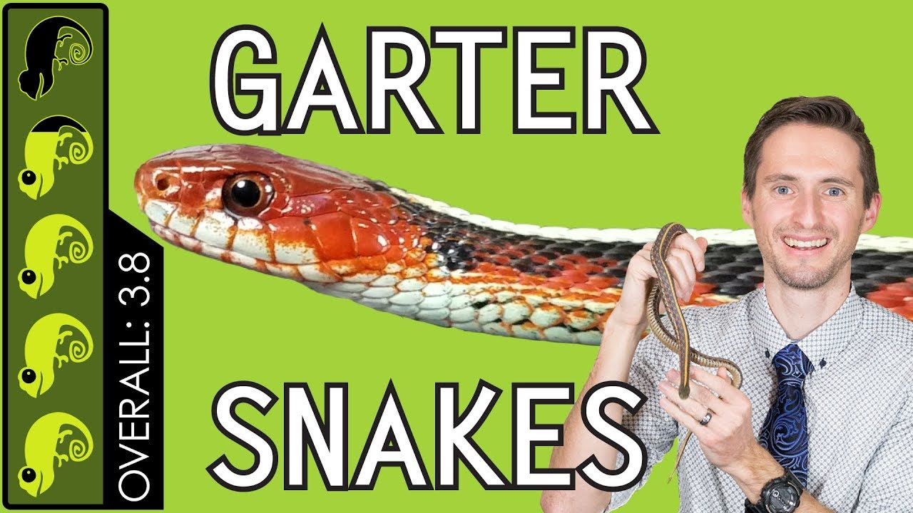 Garter Snake The Best Pet Snake Youtube