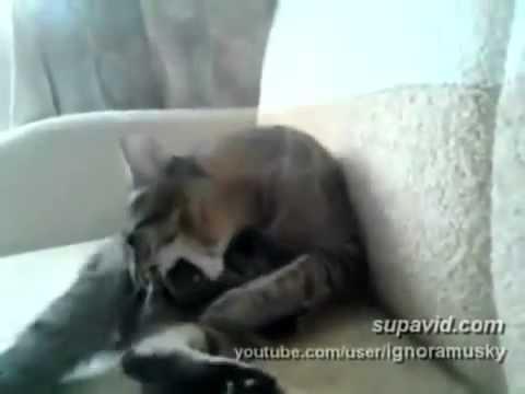 Как отлупить кота