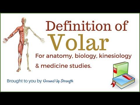Volar Definition (Anatomy, Kinesiology, Medicine)