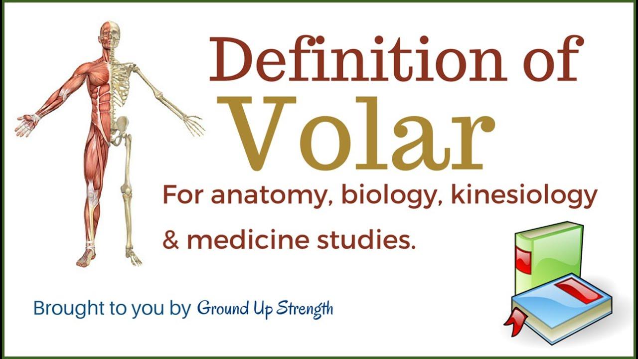 Volar Definition (Anatomy, Kinesiology, Medicine) - YouTube