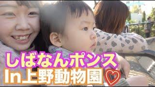 【アフレコ】しばなんファミリー、上野動物園お散歩♪