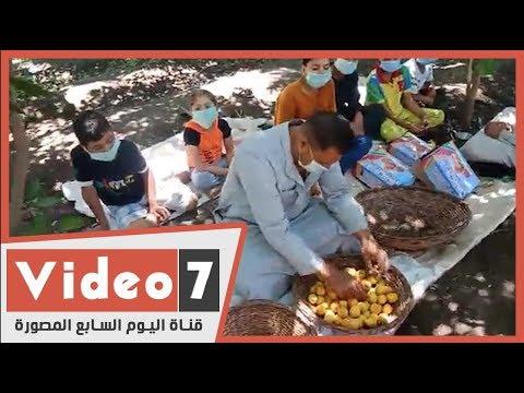 حصاد المحصول الذهبى المشمش بقرية العمار  - 12:59-2020 / 6 / 5