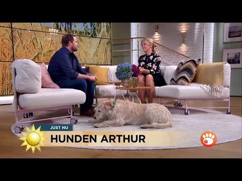 Mötet med hunden Arthur förändrade hans liv - Nyhetsmorgon (TV4)