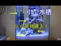 第72話 ついに!小型水槽にマガキガイ、スガイを追加 【小型水槽で海水魚シリーズ】