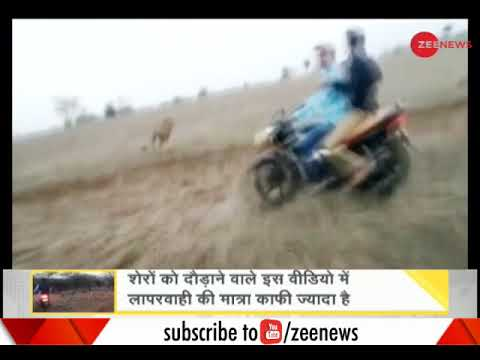 DNA: Video of two bikers chasing lions in Gujarat's Gir goes viral on social media