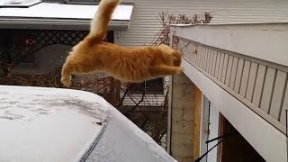 Repeat youtube video Funny Cat Jump Fail 2015