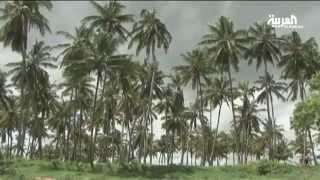 شجرة جوز الهند تعتبر زينة مزارع الصومال Youtube