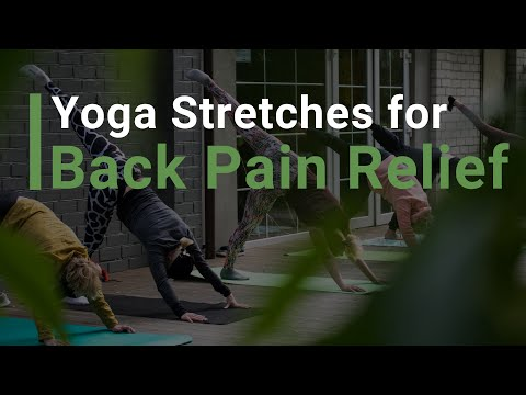 yoga stretches for back pain relief  youtube