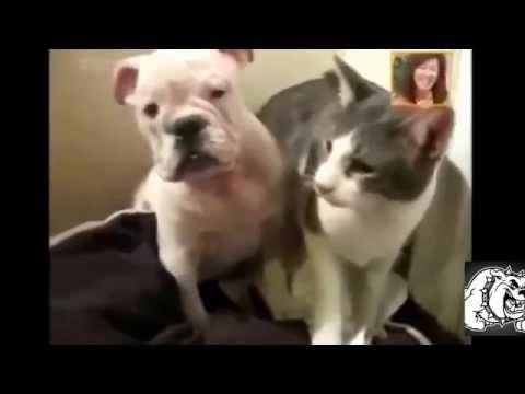 Смешные животные.Как кошка с собакой.Видео приколы.