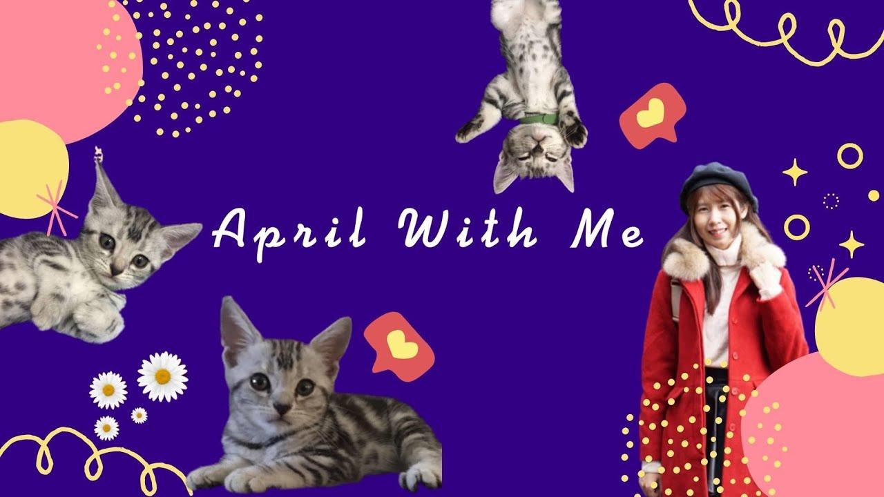 เริ่มต้นเลี้ยงแมวพันธุ์อเมริกัน ช็อตแฮร์ : Q\u0026A มารู้จักกับเอพริ้ลกันเถอะ | April With Me