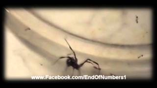 Amazing! Spider, Killed By Fire Ants! Must See!