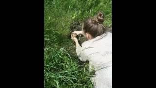 Как поймать бурундука #бурундуки #визг_бурундука# в мире животных