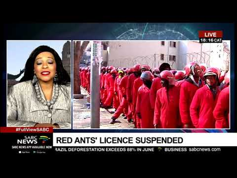 suspension-of-the-red-ants:-linda-mbana