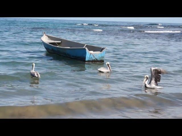 Un día en Puerto Viejo