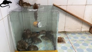 Mouse Trap With Water Cans And Wire Mesh  Best Way To Make Homemade Mousetrap
