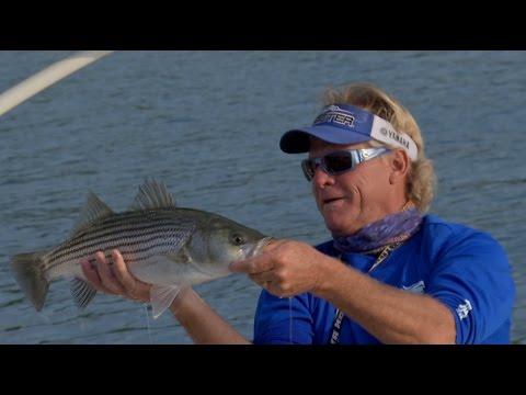 Lake Lanier Striped Bass Fishing in Buford Georgia