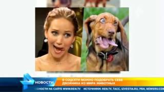 В соцсетях можно подобрать себе двойника из мира животных