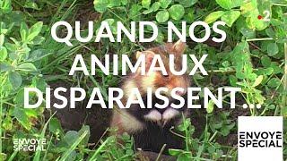Envoyé spécial. Quand nos animaux disparaissent... - 14 février 2019 (France 2)