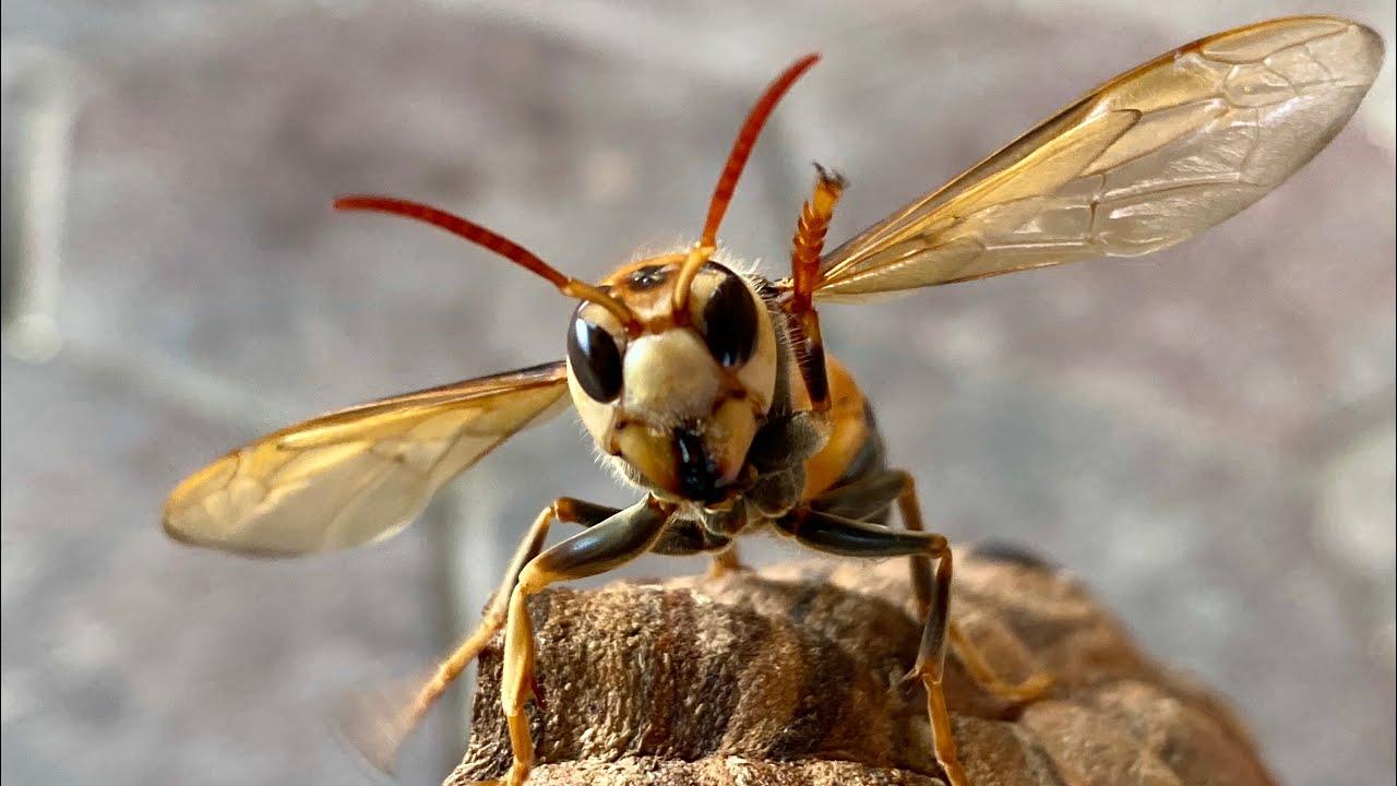 Bắt Ong Đất Chiều Tà Trên Cao Nguyên Tuyệt Đẹp