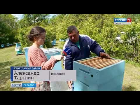 Пчёлы отмечают свой профессиональный праздник