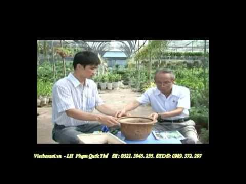 Kỹ thuật trồng và chăm sóc cây cảnh -  Phần 1/4 ( Kỹ thuật Bonsai cây cảnh)