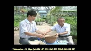 Phim | Kỹ thuật trồng và chăm sóc cây cảnh P1 4 alomua.vn, huongsacdatviet.com, tacphamvietnam.com | Ky thuat trong va cham soc cay canh P1 4 alomua.vn, huongsacdatviet.com, tacphamvietnam.com