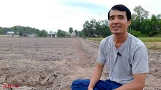 Gambar cover Những Khó Khăn Và Thuận Lợi Trong Việc Trồng Mì Ở Tây Ninh // Quan tv