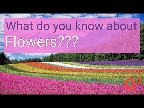 do-you-know-these-flowers?-guess-their-names.-|-flower-quiz