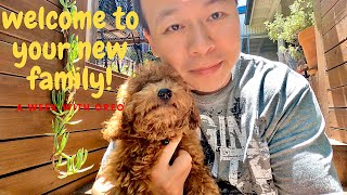 A Week With Our New Cavoodle Puppy!