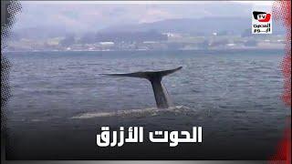 مزاعم الحوت الأزرق في مرسى مطروح (القصة الكاملة)