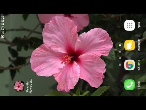 Beautiful Flowers Live Wallpaper PRO