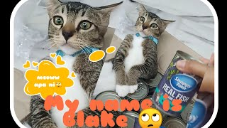 #catlover #catfood #snappy unboxing food for my Blake