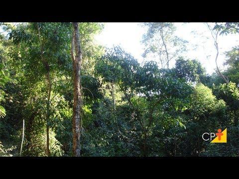 Clique e veja o vídeo Curso Reposição Florestal