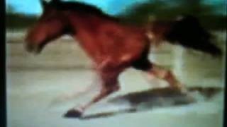 Retarded Running Horse (original)