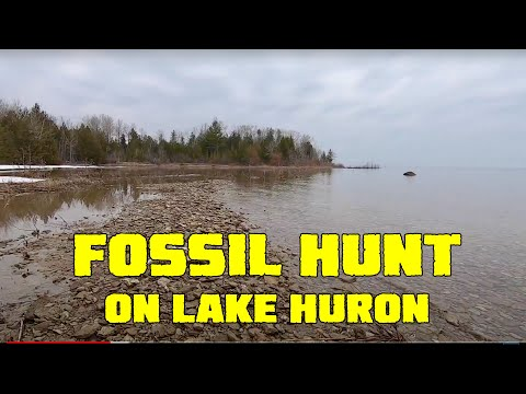 Fossil Hunting At Partridge Point
