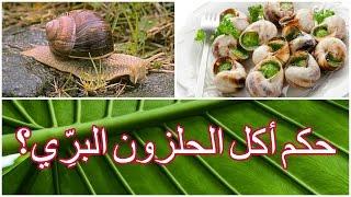 حكم أكل الحلزون البرِّي للشيخ فركوس الجزائري