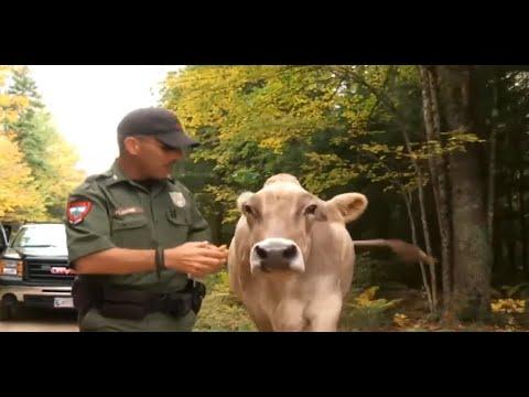 Extreme Animal Police