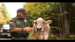 Extreme Animal Police